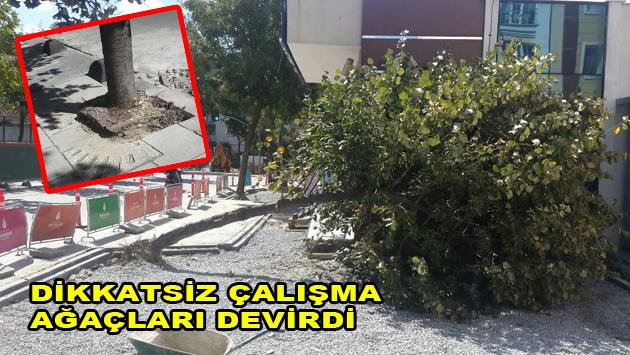 Dikkatsiz çalışma ağaçlara zarar veriyor