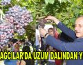BAĞCILAR'DA ÜZÜM DALINDAN YENİR