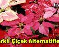 Farklı çiçek alternatifleri