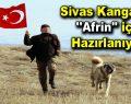 """Sivas Kangalları """"Afrin"""" için hazırlanıyor!"""
