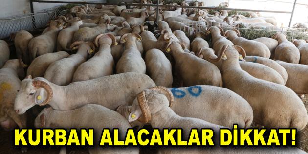 KURBAN ALACAKLAR DİKKAT!