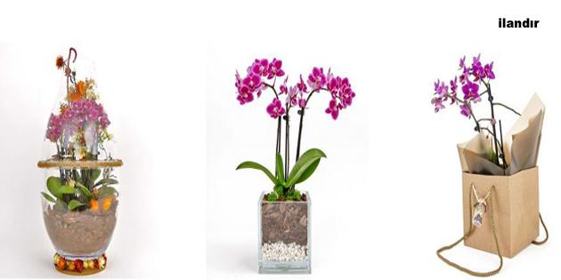 Uygun Orkide Fiyatları Sizlerle