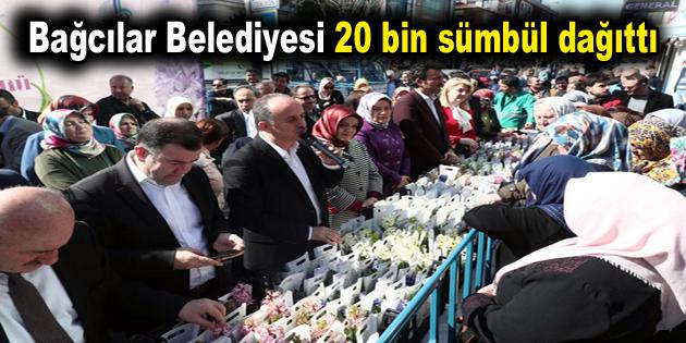 Bağcılar Belediyesi 20 bin sümbül dağıttı