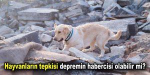 Hayvanların tepkisi depremin habercisi olabilir mi?