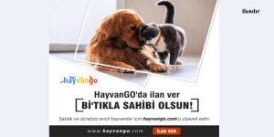 Satılık ve ücretsiz evcil hayvanlar hayvango.com'da