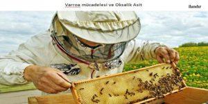 Varroa mücadelesi ve Oksalik Asit