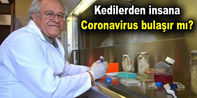 Kedilerden insana Coronavirus bulaşır mı?