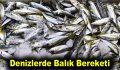 Denizlerde balık bereketi
