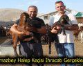 Korkmazbey Halep Keçisi İhracatı Gerçekleştirildi