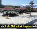 Bağcılar'da 8 bin 506 sokak hayvanı tedavi edildi